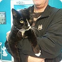 Adopt A Pet :: *BOOTS - Winder, GA