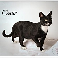 Adopt A Pet :: Oscar de la Renta Mr. Class in a Tux - Atlanta, GA