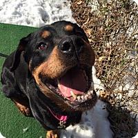 Adopt A Pet :: Rosa Lee - Rexford, NY
