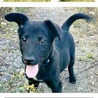 Adopt A Pet :: Sherman - Rexford, NY