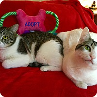 Adopt A Pet :: Brothers - Scottsdale, AZ