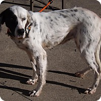 Adopt A Pet :: Adele- ADOPTION PENDING! - Wood Dale, IL