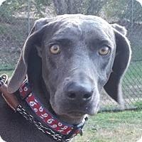 Adopt A Pet :: Wendy - Birmingham, AL