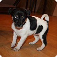 Adopt A Pet :: Wynter - Henderson, NV
