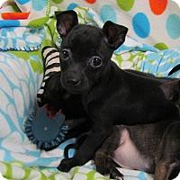 Adopt A Pet :: PIXEL - Hartford, CT