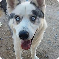 Adopt A Pet :: Vermont - Apple valley, CA