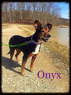 Shepherd (Unknown Type) Mix Dog for adoption in Sharon Center, Ohio - Onyx