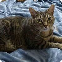 Adopt A Pet :: Phantom - Gaithersburg, MD