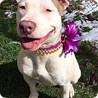 Adopt A Pet :: Sandy - Flint, MI