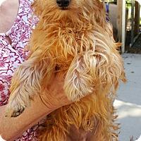 Adopt A Pet :: Percy - Baileyton, AL
