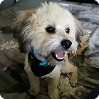 Adopt A Pet :: Benji - Adoption Pending - West Allis, WI