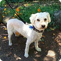 Adopt A Pet :: Albert - Penngrove, CA