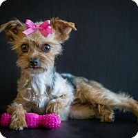 Adopt A Pet :: Lilly - Phelan, CA
