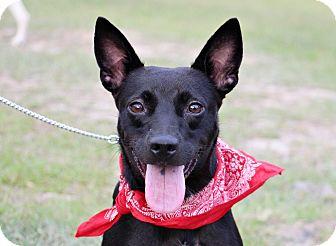 Kai Dog Mix Dog for adoption in San Francisco, California - Cherry