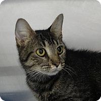 Adopt A Pet :: Juniper - Elyria, OH