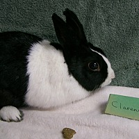 Adopt A Pet :: Clarence - Harrisburg, PA