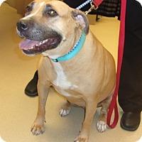 Adopt A Pet :: Sage - tucson, AZ