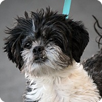 Adopt A Pet :: Gizmo - Palmdale, CA