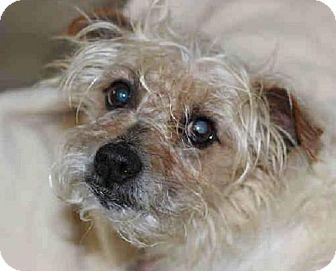 Terrier (Unknown Type, Medium) Dog for adoption in Spartanburg, South Carolina - Clover