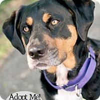 Adopt A Pet :: Sadie - West Des Moines, IA