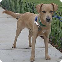 Adopt A Pet :: Butterfinger - Las Vegas, NV