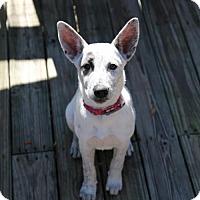 Adopt A Pet :: Dot - Nesbit, MS