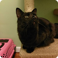 Adopt A Pet :: Gunther - East Hartford, CT