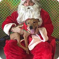 Adopt A Pet :: St. Nicolas - Dayton, OH