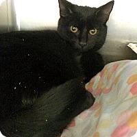 Adopt A Pet :: Track - Lunenburg, MA