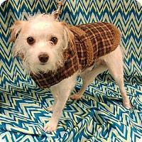 Adopt A Pet :: Didymus - Baton Rouge, LA