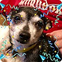 Adopt A Pet :: Gilley - ST LOUIS, MO