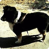 Adopt A Pet :: Beamer - La Habra, CA