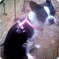 Adopt A Pet :: Calypso - Mooy, AL