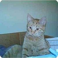 Adopt A Pet :: Charlie - San Ramon, CA