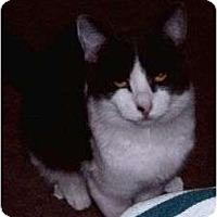 Adopt A Pet :: Bella - Prescott, AZ