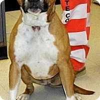 Adopt A Pet :: Tulip - Washington Court House, OH