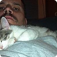 Adopt A Pet :: Jackson - Saint Albans, WV
