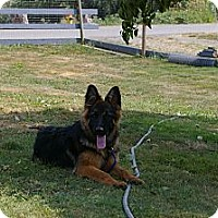 Adopt A Pet :: Maddie - BC Wide, BC