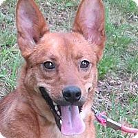 Adopt A Pet :: Mylo - Brattleboro, VT