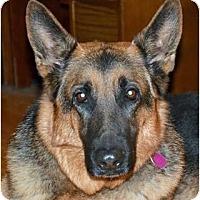 Adopt A Pet :: Kane - Rigaud, QC