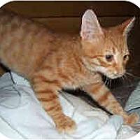 Adopt A Pet :: Donnie & Marie - Dallas, TX