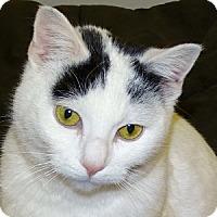 Adopt A Pet :: Victoria - Mt. Vernon, NY