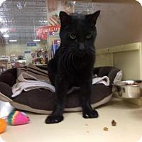 Adopt A Pet :: Sherman - Willingboro, NJ