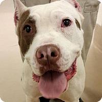 Adopt A Pet :: Rosie - Snellville, GA