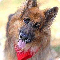 Adopt A Pet :: Carlton - Pompano Beach, FL