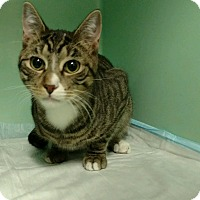 Adopt A Pet :: Pork Chop - Rockaway, NJ