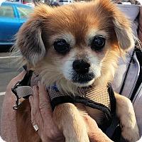 Adopt A Pet :: Elsie - Fresno, CA