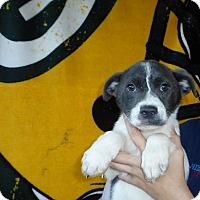 Adopt A Pet :: Katie - Oviedo, FL