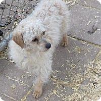 Adopt A Pet :: Henry - Huddleston, VA