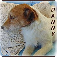 Adopt A Pet :: Danny - Marlborough, MA